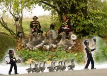 Back_Stage_Kitty_Hagen_ganzenfanfare_dieren_act