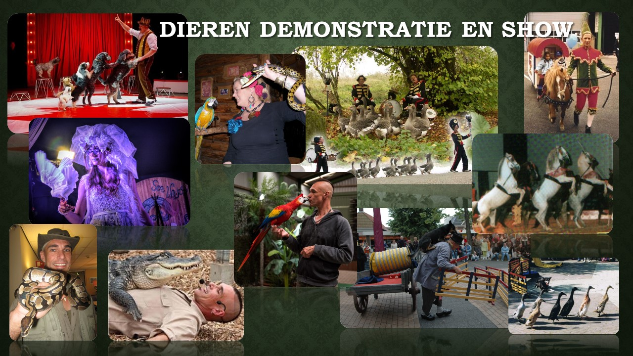 Dieren demonstratie en show Back Stage Kitty Hagen